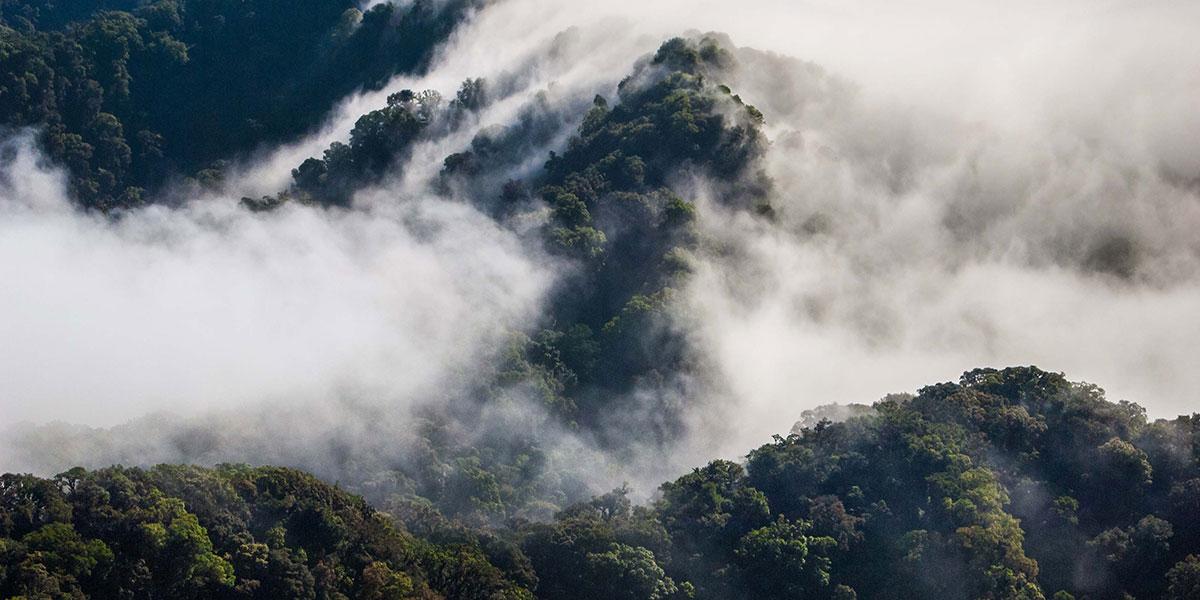 EL TRIUNFO CHIAPAS 24 September 2020 Los 5 bosques más bonitos de México