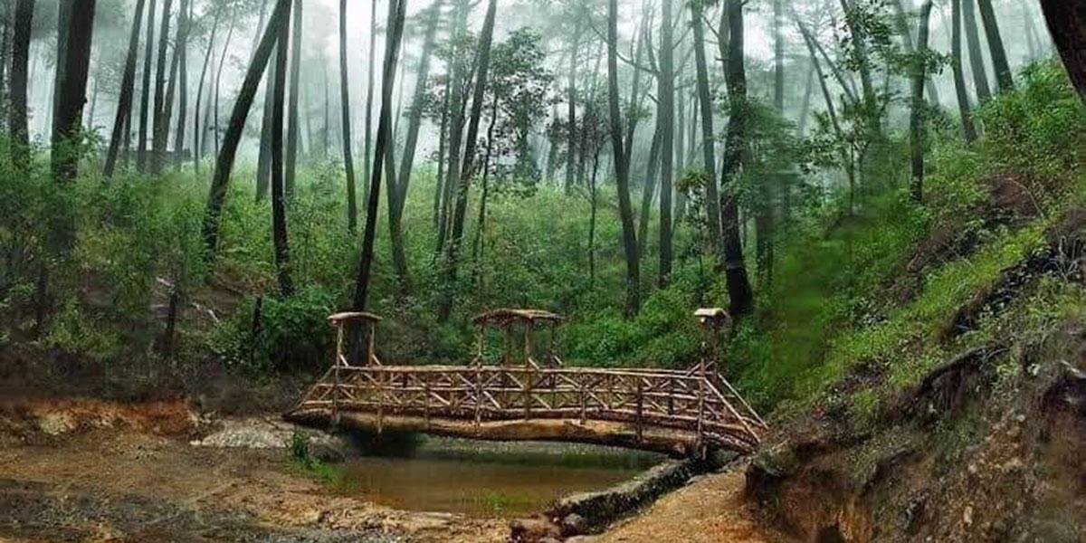 MAZAMITLA 24 September 2020 Los 5 bosques más bonitos de México