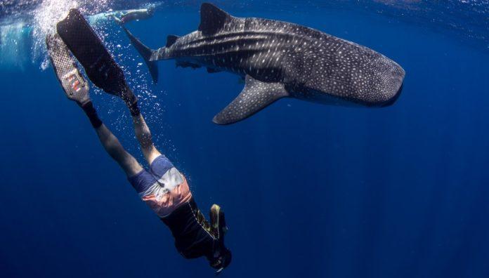 Baja Therapy: el ecoturismo en video para conocer Baja California