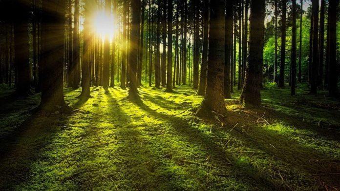 5 bosques en la Ciudad de México