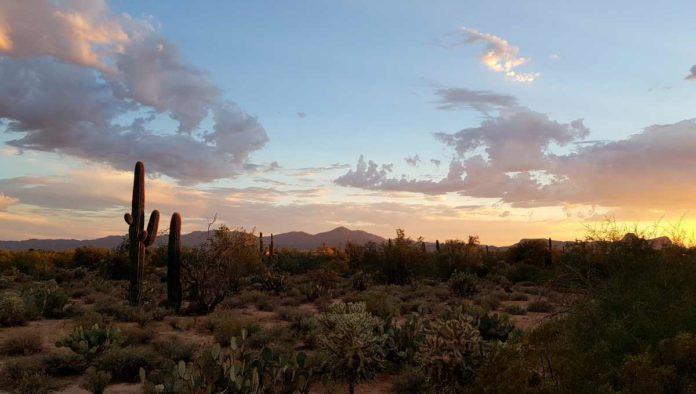 5 cosas que no sabías del Desierto de Sonora