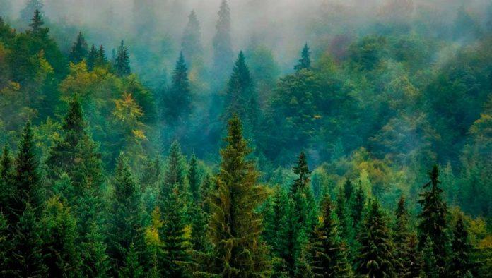 Los 5 bosques más bonitos de México