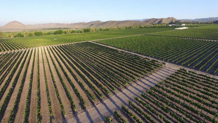 Los vinos de Parras, en su mejor momento