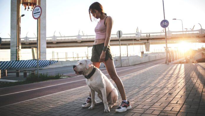 Alemania cuida la salud de los perros caseros