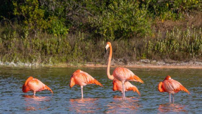 Sisal: refugio para los amantes del ecoturismo en Yucatán