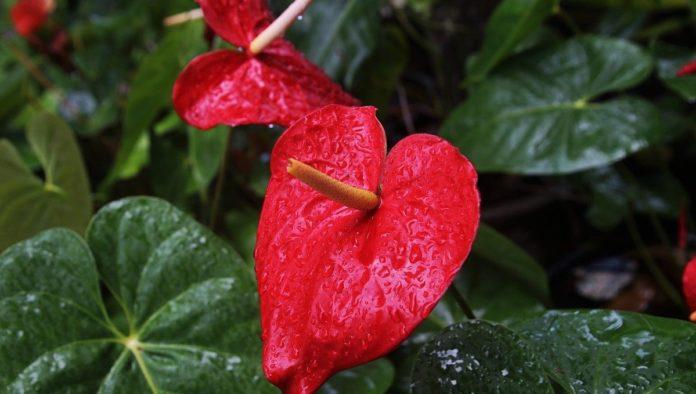 Plantas de interior con flores de larga duración para decorar tu hogar