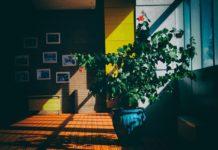 plantas descontaminantes para interior