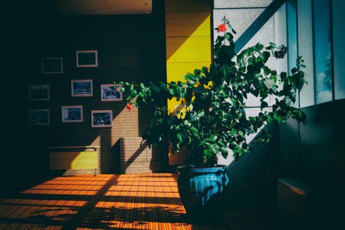 Las mejores plantas descontaminantes para interior