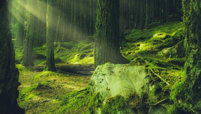 Ixtlán Oaxca y su bosque de niebla