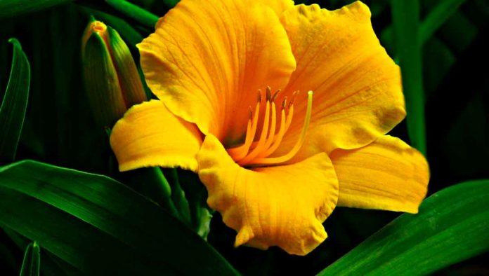 Beneficios de la flor de calabaza