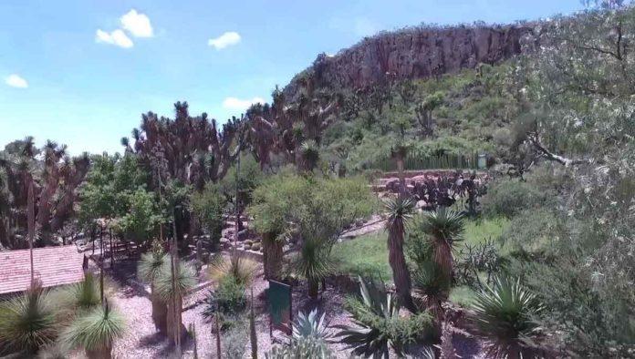 Jardín Botánico Regional de Cadereyta - La flor en el desierto