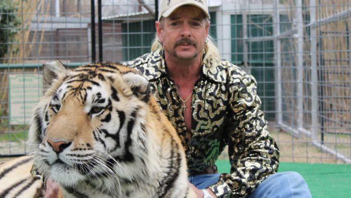 ¡Por fin! Tres leones de Joe Exotic, protagonista de Tiger King, son rescatados