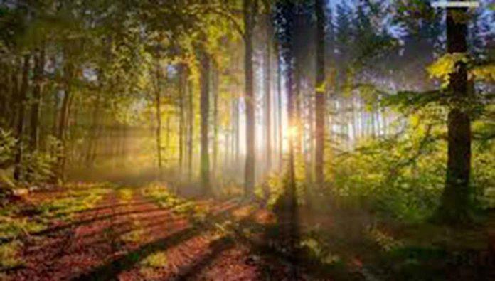 Peña de Lobos, la magia del bosque embrujado