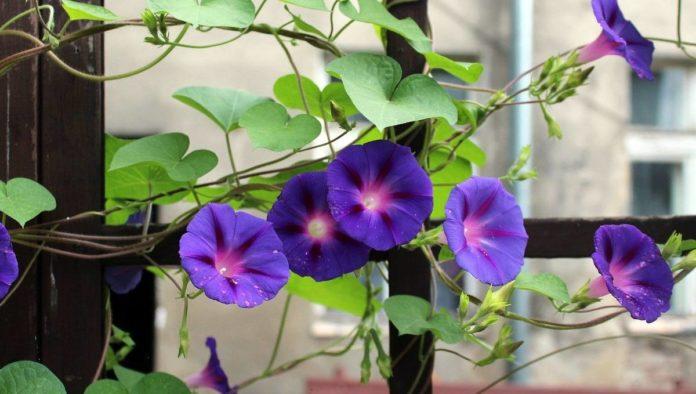 Plantas ideales para el balcón