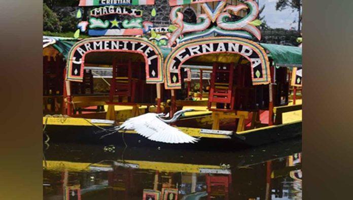 Lo mejor de Xochimilco