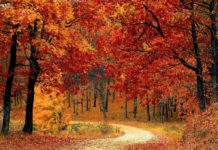 3 paisajes de otoño