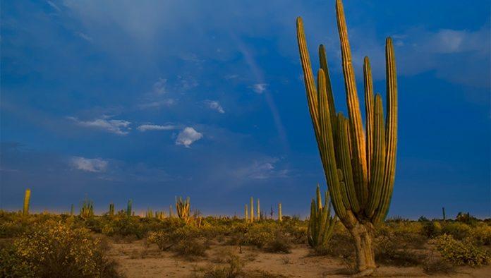 México: el santuario de los cactus gigantes