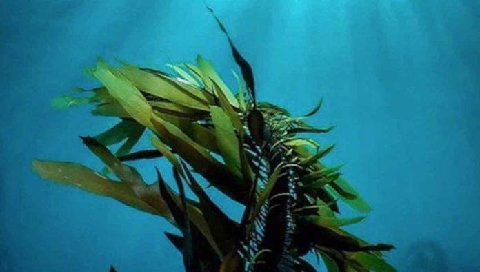 Alga espirulina, el secreto del alimento mexica