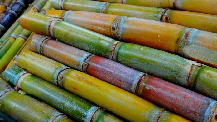 5 estados productores de caña de azúcar en México