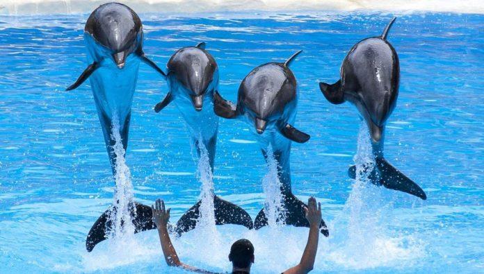 Delfines: ¿por qué evitar los espectáculos con ellos?
