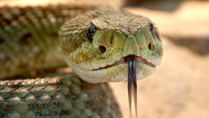 Herpetario X-Plora Reptilia: el universo científico de Metztitlán