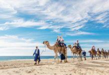 Paseo en camello por Los Cabos