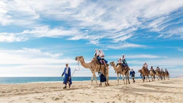 Paseo en camello ¿por Los Cabos?