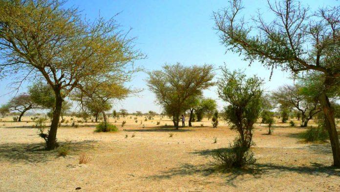 ¿Sabías que el Sahara tiene cientos de millones de árboles?