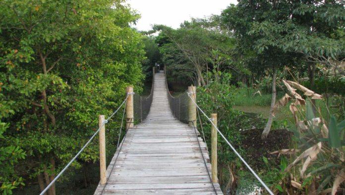 10 razones para explorar los Pantanos de Centla