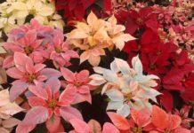 3 paisajes para inmortalizar el otoño