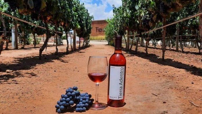 Campo Real: el rostro vinícola de Zacatecas
