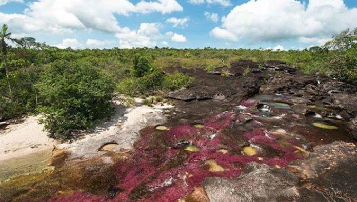 Caño Cristales, el río más bello de Colombia