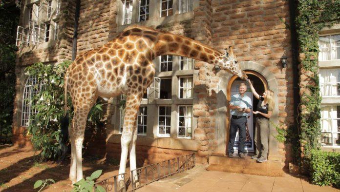 Giraffe Manor: el hotel de las jirafas curiosas