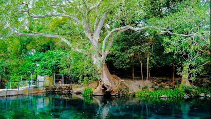 La Tovara, la bella jungla de la costa nayarita