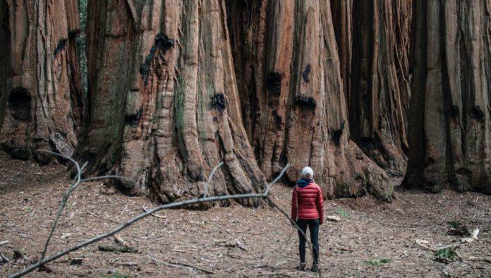Sequoia National Park: tierra de los gigantes más longevos del mundo