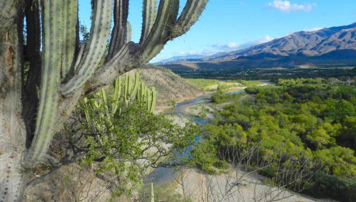 Reserva de la Biosfera Tehuacán-Cuicatlán: riqueza natural que se vive con grandeza