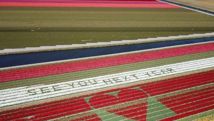 Campos de tulipanes: agricultores holandeses escriben mensajes de esperanza