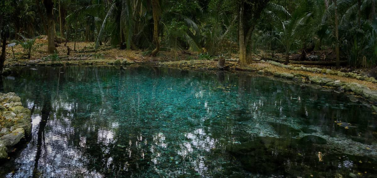 Disfruta la Reserva de la Biosfera Los Petenes en Campeche - Mexico Travel  Channel