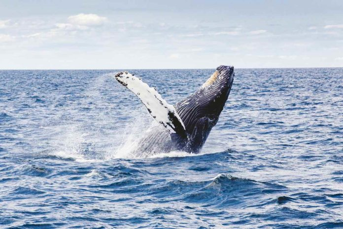 Kaikoura, el santuario mundial de las ballenas