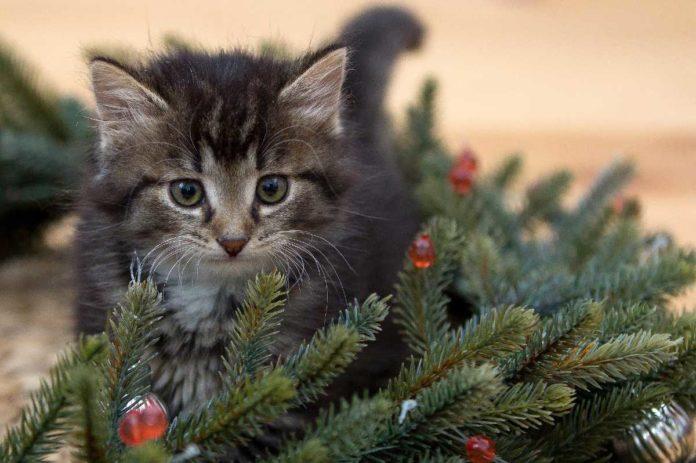 En Italia crean árbol de Navidad con casas para gatos callejeros