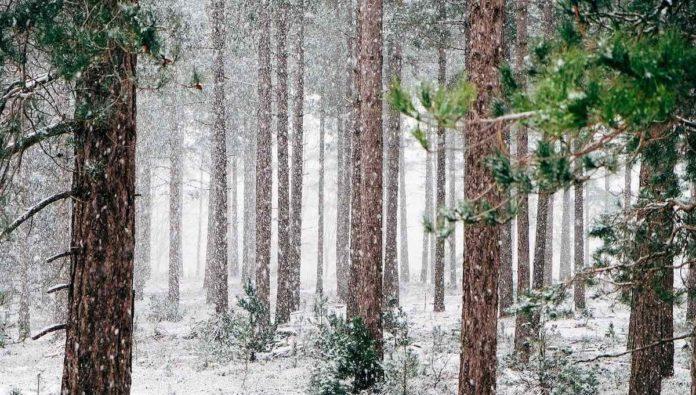 5 destinos mexicanos para que disfrutes la nieve