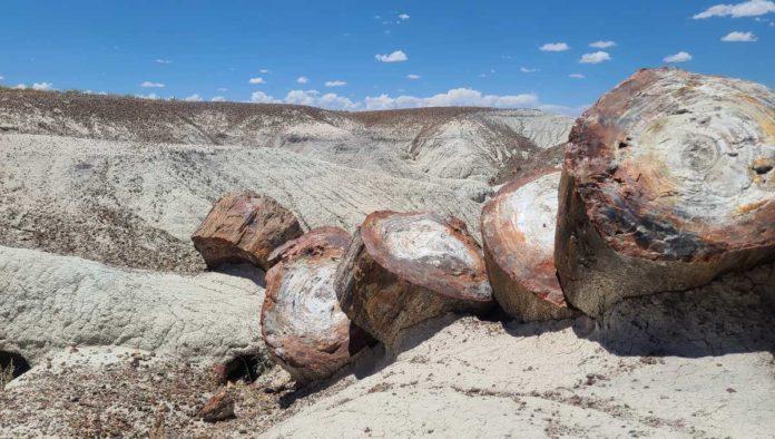 Parque Nacional del Bosque Petrificado: un viaje al pasado en Arizona