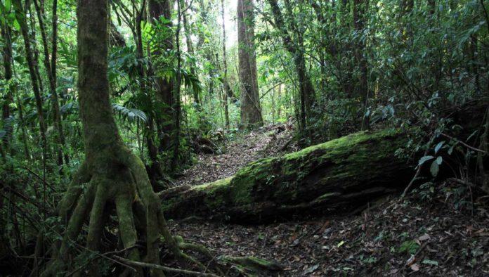 Reserva de la Biosfera El Triunfo: explora su lado sustentable