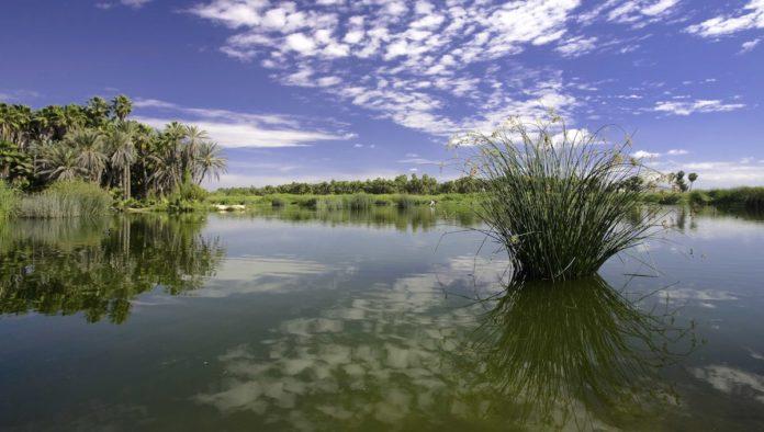Turismo sustentable: participa Baja California Sur en proyecto nacional en favor de la biodiversidad
