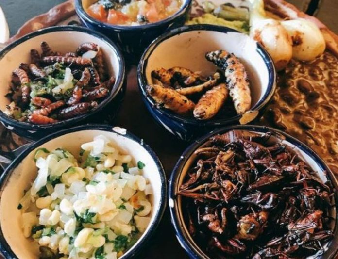 ¡Un verdadero manjar! 5 insectos que se comen en México