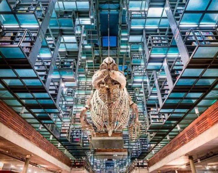 Las bibliotecas más bonitas de la CDMX