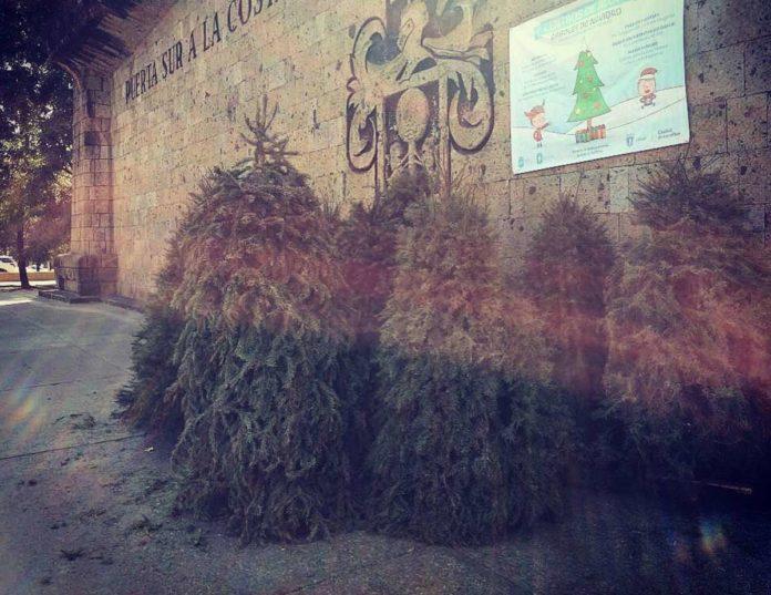 Centros de acopio en CDMX para los árboles de Navidad