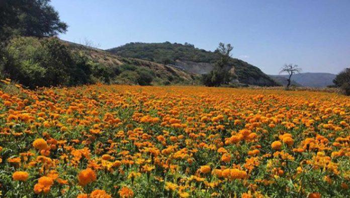 Copándaro de Galeana, el pueblo de las flores y los aguacates