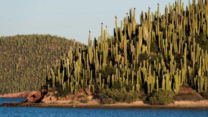 ¿Conoces las islas donde los cactus son los amos del lugar?