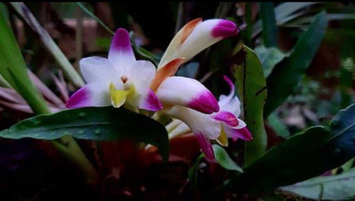 Orquideario Moxviquil, reino de las flores más exóticas